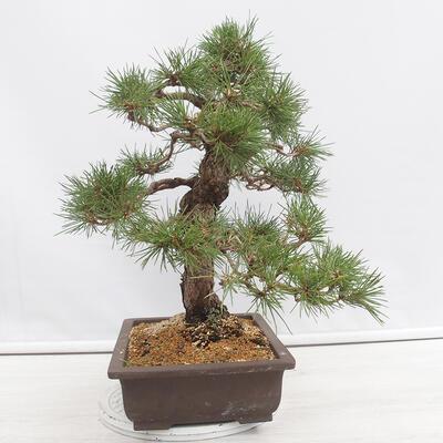 Bonsai miska 31 x 24 x 10 cm, barva béžovošedá - 2