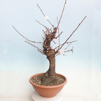Bonsai miska 24 x 19 x 7,5 cm, barva béžová - 2
