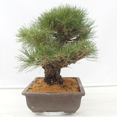 Bonsai miska 22 x 17 x 7 cm, barva šedobéžová - 2