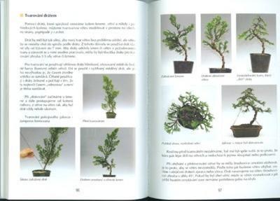 Kniha bonsai nejen v paneláku - 2