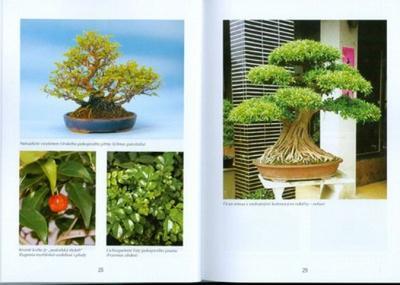 Bonsaje a záhrady nielen v Japonsku - 2