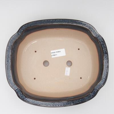 Venkovní  bonsai -  Pseudocydonia sinensis - Kdouloň čínská - 3