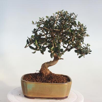 Bonsai miska 37 x 26 x 11 cm, barva šedobéžová - 3
