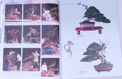 Bonsai focus - anglicky č.145 - 3