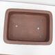 Vonkajší bonsai -Malus halliana - Maloplodé jabloň - 3/4