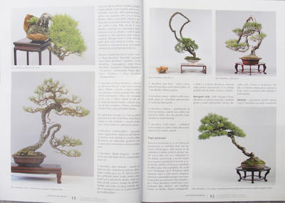 Bonsaje a Japonské zahrady č.51 - 3