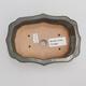 Venkovní bonsai -Carpinus CARPINOIDES - Habr korejský - 3/4