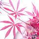 Venkovní bonsai - Acer palm. Atropurpureum-Javor dlanitolistý červený - 3/3
