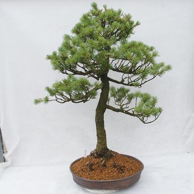 Bonsai miska 38 x 30 x 8 cm, barva šedomodrá - 3