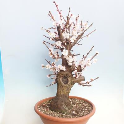 Bonsai miska 34,5 x 26 x 9 cm, barva šedá - 3