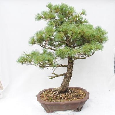 Bonsai miska 26,5 x 19,5 x 8 cm, barva šedá - 3