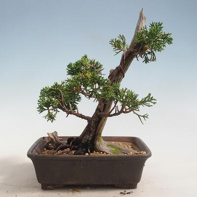 Bonsai miska 31 x 24 x 10 cm, barva béžovošedá - 3