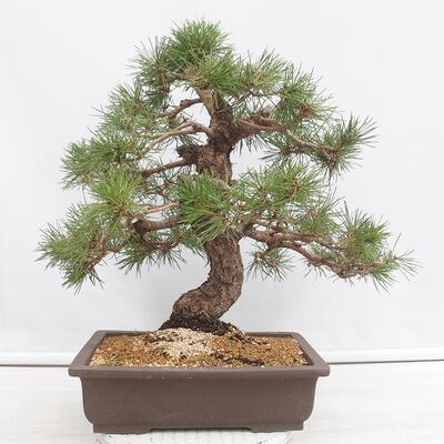 Bonsai miska 22,5 x 17 x 7 cm, barva šedobéžová - 3