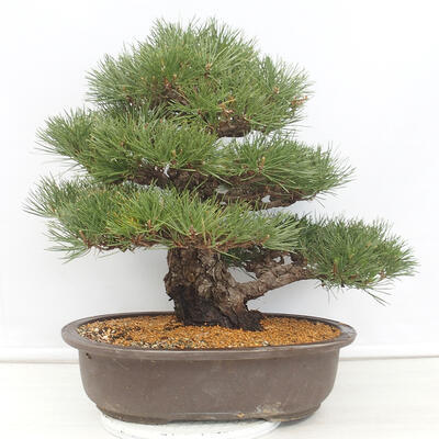 Bonsai miska 22 x 17 x 7 cm, barva šedobéžová - 3