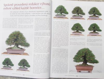 Bonsaje a Japonské zahrady č.51 - 4