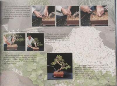 Podstavy Bonsai - Jürgen Zaara - 4