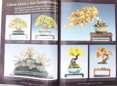 Bonsaje a Japonské zahrady č.51 - 5