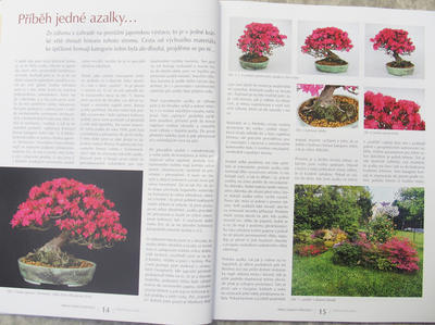 Bonsaje a Japonské zahrady č.52 - 5