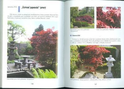 Kniha bonsai nejen v paneláku - 5
