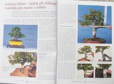 Bonsaje a Japonské zahrady č.52 - 6