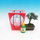 Izbová bonsai v darčekovej taške, Ulmus parvifolia - malolistá brest