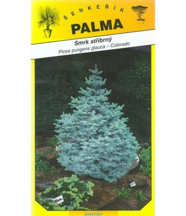 Smrk stříbrný - Picea pungenc glauca
