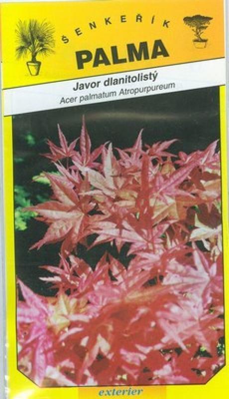 Javor dlanitolistý - Acer palmatum Atropurpureum
