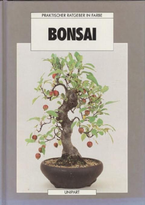 Bonsai - Anne Swinton